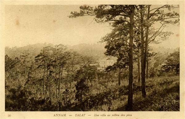 30 ANNAM - DALAT - Une villa au milieu des pins